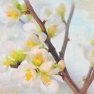 Beautiful White Snow Drop Flower by daphsam