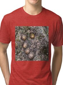 Shells on the Rocks Tri-blend T-Shirt