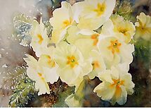 Primrose Posy by Ruth S Harris