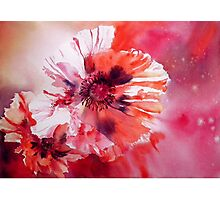 Cosmic Poppies Photographic Print