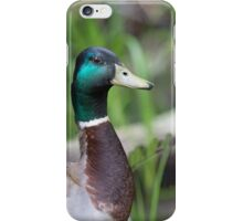Mallard Duck iPhone Case/Skin
