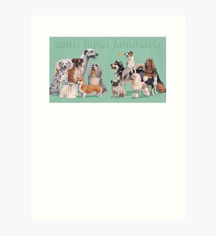 Dog Breed - canis lupus familiaris Art Print