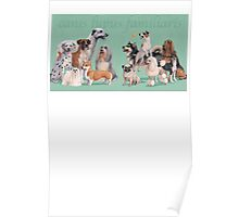 Dog Breed - canis lupus familiaris Poster