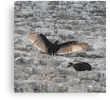 Vultures in Coba Canvas Print
