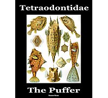 The Puffer Fish Photographic Print