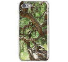 Tree in Japanese Tea Garden iPhone Case/Skin
