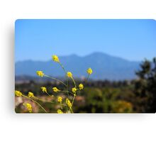 yellow blossom - mountain background Canvas Print