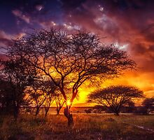A Wish at Sunset – Manyara Ranch by Owed To Nature