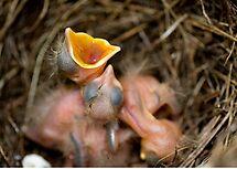 Hatchlings by Maree Toogood