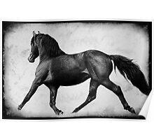 Lippitt Morgan Stallion Trotting Poster