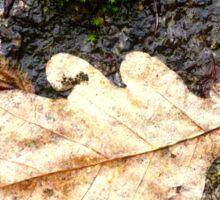 Leaf on granite Sticker