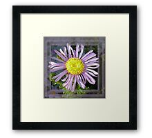 Close Up Lilac Aster With Bright Yellow Centre Framed Print