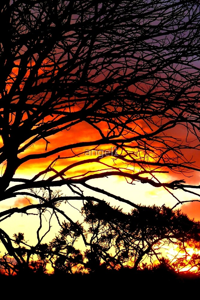 Sunset and tree silhouettes by ©The Creative  Minds