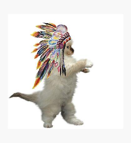 indian cat Photographic Print