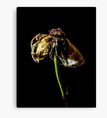 Decayed Flower Canvas Print
