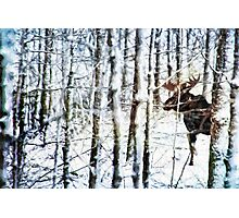Painted Moose Photographic Print
