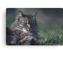 """Chat - Cat  """" Tchink boom"""" 01 (c)(t) ) by Olao-Olavia / Okaio Créations 300mm  f.2.8 canon eos 5  1989 Canvas Print"""