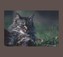 "Chat - Cat  "" Tchink boom"" 01 (c)(t) ) by Olao-Olavia / Okaio Créations 300mm  f.2.8 canon eos 5  1989 Baby Tee"