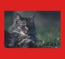 """Chat - Cat  """" Tchink boom"""" 01 (c)(t) ) by Olao-Olavia / Okaio Créations 300mm  f.2.8 canon eos 5  1989 Baby Tee"""