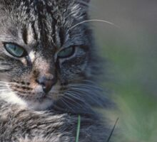 """Chat - Cat  """" Tchink boom"""" 01 (c)(t) ) by Olao-Olavia / Okaio Créations 300mm  f.2.8 canon eos 5  1989 Sticker"""