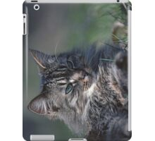 "Chat - Cat  "" Tchink boom"" 01 (c)(t) ) by Olao-Olavia / Okaio Créations 300mm  f.2.8 canon eos 5  1989 iPad Case/Skin"
