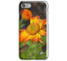 Last of the Marigolds iPhone Case/Skin