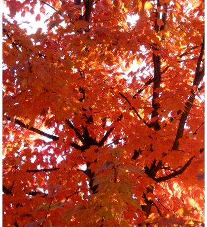 Autumn in Idaho... Sticker