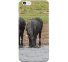 Trent Horses iPhone Case/Skin