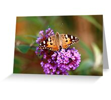 Painted Lady Butterfly (Vanessa cardui) Greeting Card
