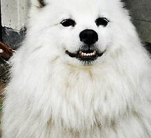 Smiling Dog by indigorayz