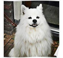 Smiling Dog Poster