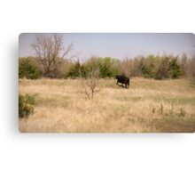 King Bull Canvas Print