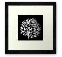 White Allium Framed Print