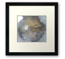 Cuddling Fur-Babies (Squirrels) Framed Print