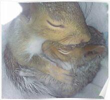 Cuddling Fur-Babies (Squirrels) Poster