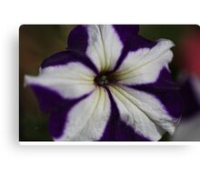 Hearts Of Petunia  Canvas Print