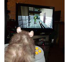 gaming rat Photographic Print