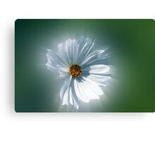 shining white Canvas Print
