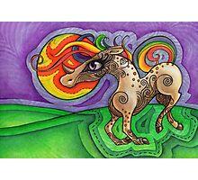 Wild Unicorn Photographic Print