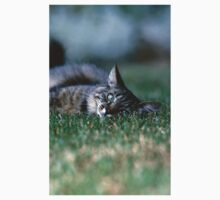 "Chat - Cat "" Tchink boom"" 03 (c)(t) ) by Olao-Olavia / Okaio Créations 300mm f.2.8 canon eos 5 1989  Baby Tee"