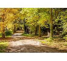 Country Laneway - Autumn Photographic Print