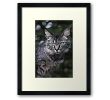 """Chat - Cat """" Tchink boom"""" 04 (c)(t) ) by Olao-Olavia / Okaio Créations 300mm f.2.8 canon eos 5 1989  Framed Print"""