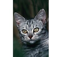 """Chat - Cat """" Peluche """" 01 (c)(h) ) by Olao-Olavia / Okaio Créations 300mm f.2.8 canon eos 5 1989  Photographic Print"""