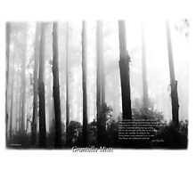 Misty Mountain Ash Sherbrooke Forest Photographic Print