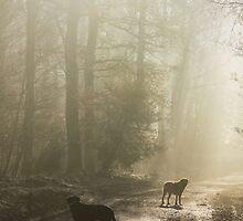Misty Woodland Walk by David Tinsley