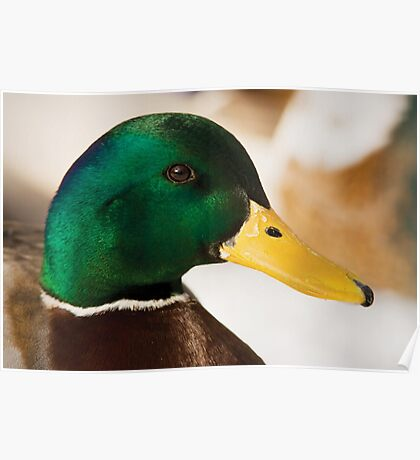 Mr Duck Poster