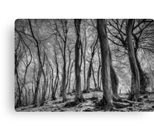 Twisted Beech Trees Canvas Print