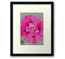 Painting of a Pink Poppy Framed Print
