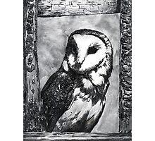 Black and White Barn Owl Photographic Print