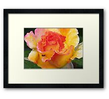 Ant on a Rose Framed Print